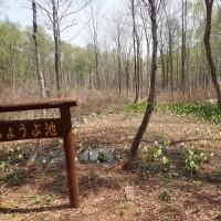 夢見平2:ショウブ池にはショウブはありませんでした。