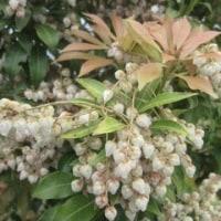 「春の嵐」に負けず花々続々
