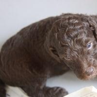 アキコ、子犬の名前が決まったってよ。
