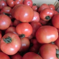 完熟トマト~国道413号 タカギの畑 直売所