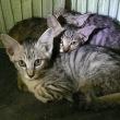 ようこそ、わが家へ! 3匹の子ネコ