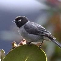 コロンビア探鳥ー16