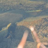 ニホンイシガメとナマズ