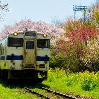 2017 宝珠山駅に電車が運ぶ春の便り 《福岡県朝倉郡東峰村》