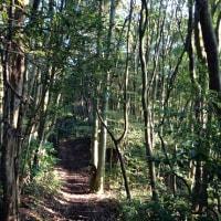 欅谷~尺岳~福智山(福岡県)
