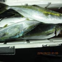 10月22日の釣果と出船予定