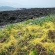 佐賀植物友の会観察会7月:串﨑海岸