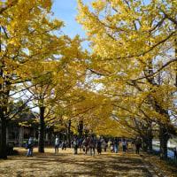 昭和記念公園(紅葉・黄葉)