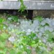大気不安定・大きな雹が突然(東京北区)