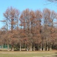 さいたま市桜区の南端にある秋ケ瀬公園では、可愛いルリビタキにまた出会いました