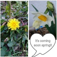 lt's coming soon this spring!