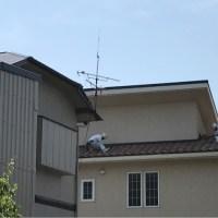 屋根坪、おっきいw