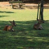 赤ちゃん 鹿大集合
