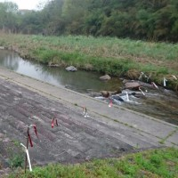 布野川鵜の対策