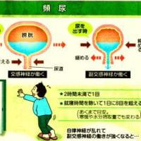 「排尿の間隔を適切に空ける!」ことも頻尿の改善方法の一つ