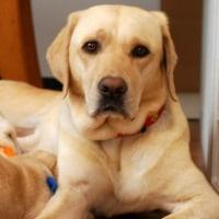 犬の溶血性貧血について 1