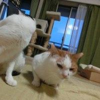 にゃん2017/4/30(日)キナ受難