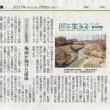 第59回 アユモドキ記念日 アユモドキが採集された日を記念日に!