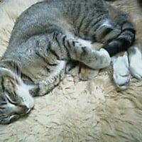冷えちゃったから寝ます