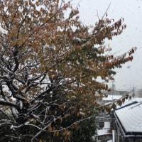 11月なのに東京に雪!