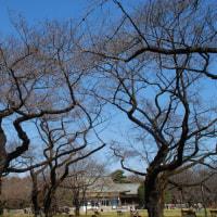 小金井公園 お花見下見