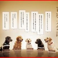 盲導犬会議♪