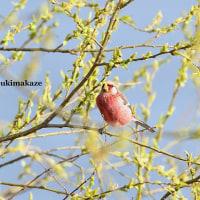 春らしく 5