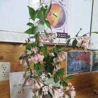 「田植え花」 は 「タニウツギ」 だった