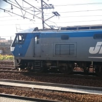 2016人間ドック後の散歩 ~松重閘門、白鷺、青鷺、JR・名鉄 電車~