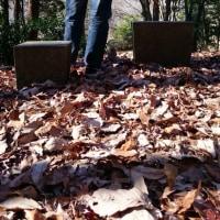 桜のつぶやき  井頭の森にて精霊と話す