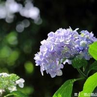 もぐもぐ♪☆雨に咲く花