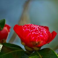 御陵の森の朱花