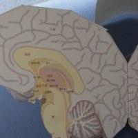 ペーパークラフト脳2
