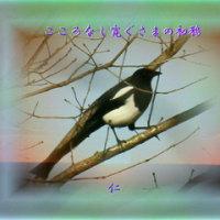 フォト575『 こころなし寛ぐさまの初鴉 』qz0303