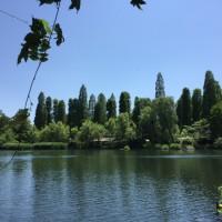井の頭恩賜公園~初夏