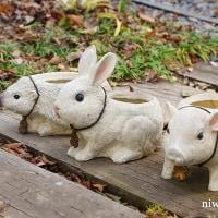 秋冬はアニマルプランターで室内ガーデニング!
