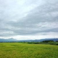横光利一が愛した稲穂の波の風景は日本の歴史のうなりだ!