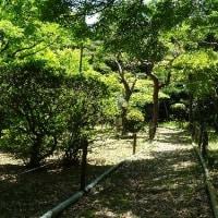 庭園の中の遊歩道