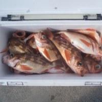 2月15日(水)オキメバル五目の釣果