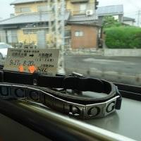 メリーちゃん、ムースちゃんに会いに大阪に行ってきました