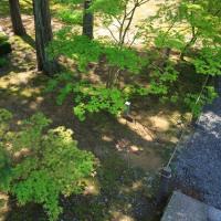 (2017年改訂版)新緑・濃緑の京都勝手にランキングその2(計161箇所)