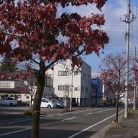 日本最大の杜氏の里を歩く
