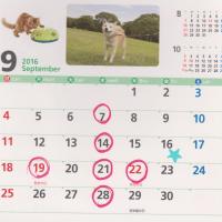 9月も暦通り診療いたします。