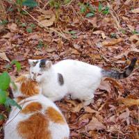 猫の集会所にある枯葉の山