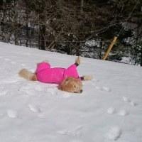 今更ですが2月の雪遊び