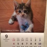 保護猫カレンダー2017