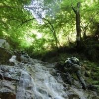 金剛山(200名山)☆沢登りを楽しみました(6月19日)