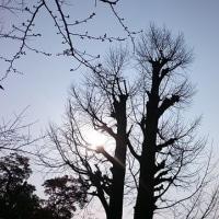 """今日も""""街歩き・道歩き"""" 国立新美術館&東京ミッドタウン"""