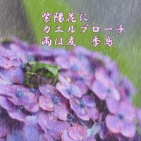 紫陽花シリーズ1