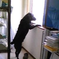看板犬 オリバー君